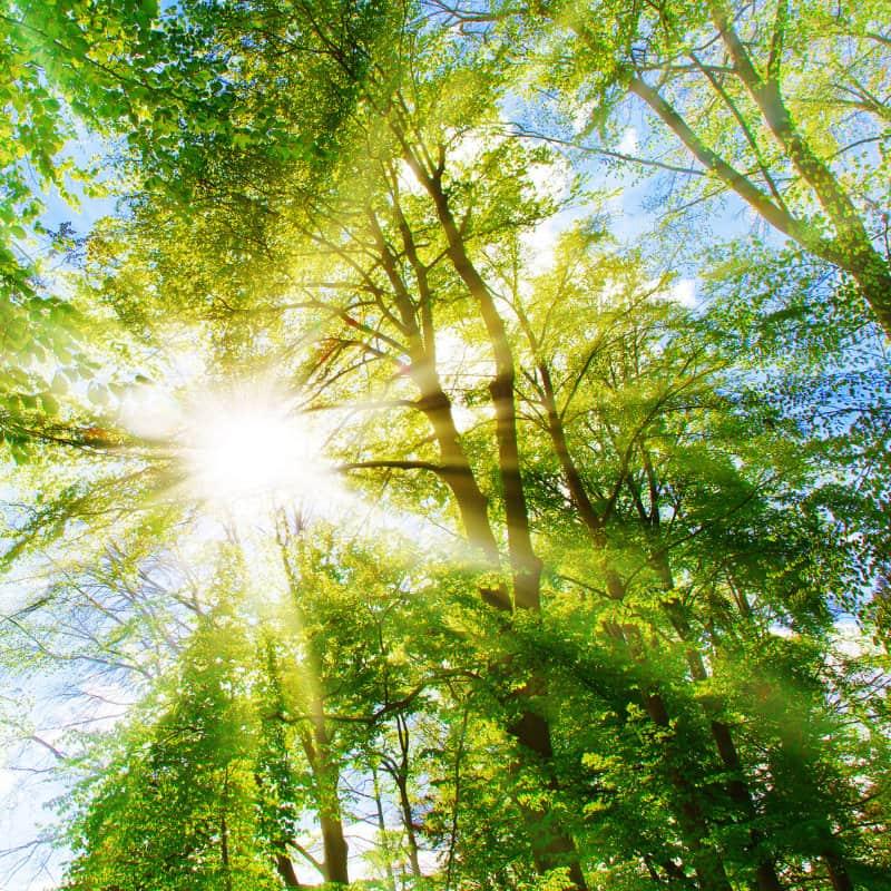 Symbolbild Wald mit Sonnenschein. NEST baut klimagerecht, um zu einer nachhaltigen Zukunft beizutragen.