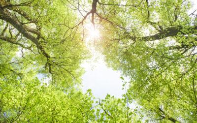 5 Gründe, warum der Klimawandel durch nachhaltiges Bauen bekämpft werden kann